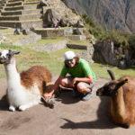Marco auf Machu Picchu mit Lamas