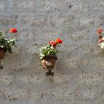Arequipa Blumen