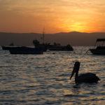 Sonnenuntergang Paracas mit Pelikan