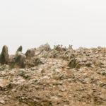 Islas Ballestas Pinguine