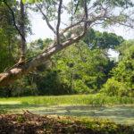 Serere Jungle