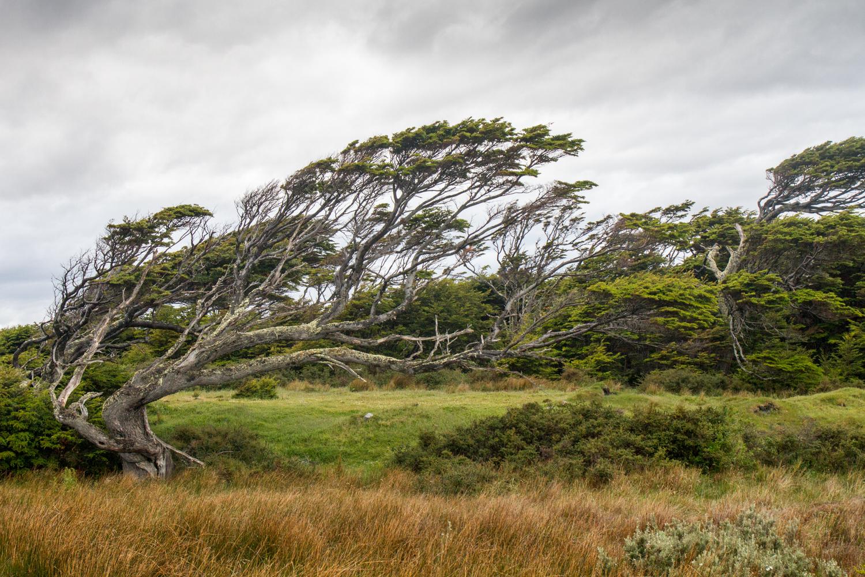 Die Kraft des Windes