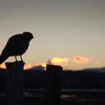 Sonnenuntergang El Calafate