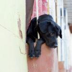 trauriger Hund :)