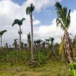 wiederaufbau nach Hurrikan