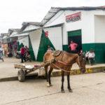 Pferde gehören hier noch zu beliebten Transportmitteln