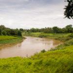 am Flussufer werden Chilis angepflanzt