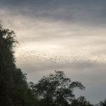 Bats Cave Battambang