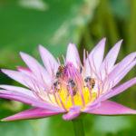 die Bienen sind am arbeiten