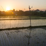 Reisfelder Seminyak