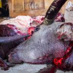Die Schädel der geschlachteten Ochsen