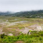 Spiderweb Reisfelder