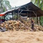 Produktion von Kokosfasern